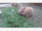 Bazar.Vylepeno.cz - mládata králíčků